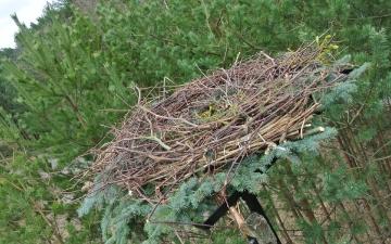 Montaż bocianiego gniazda 14.03.2015